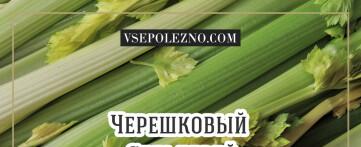 Чем полезен черешковый сельдерей?