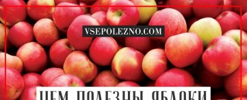 Чем полезны яблоки для организма человека?