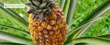 Чем полезен ананас для организма мужчины
