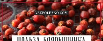 Полезные свойства боярышника для женского здоровья