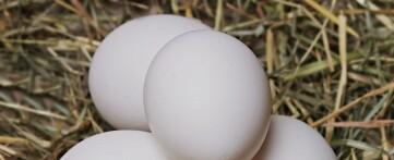 Перепелиные и куриные сырые яйца натощак или как?