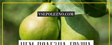 Чем полезна груша для организма человека?