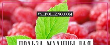Польза малины для организма женщины