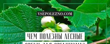 Чем полезны лесные орехи для организма?