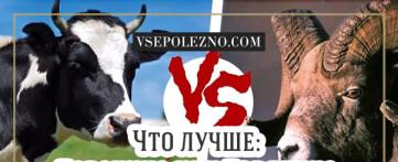 Что лучше говядина или баранина?