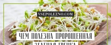 Чем полезна пророщенная зеленая гречка для организма человека