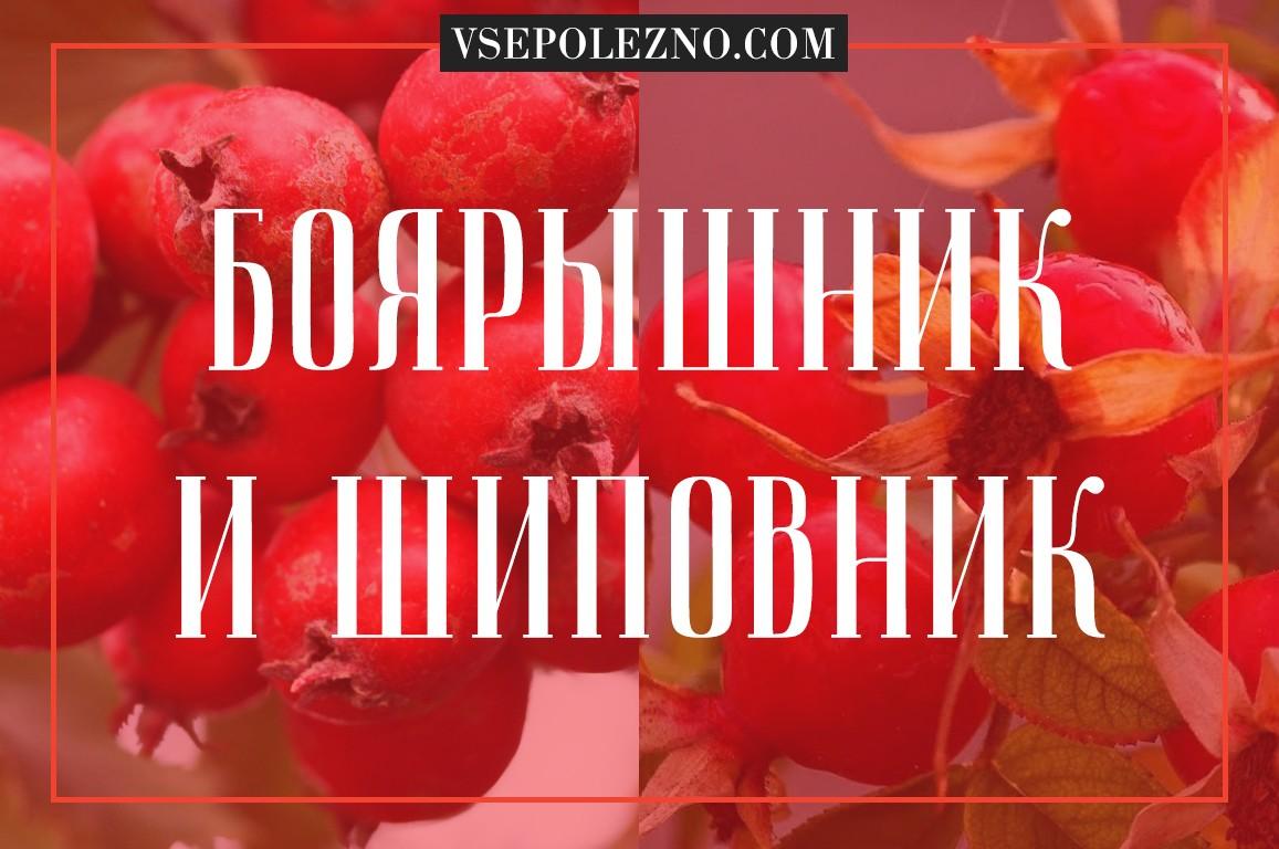 Как отличить боярышник от шиповника  Советы врачей