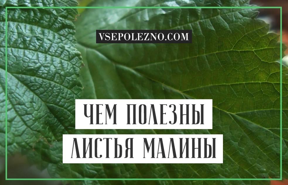Сушеные листья малины полезные свойства