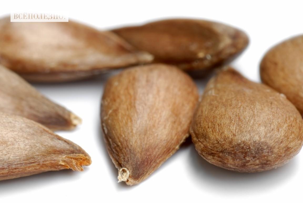 Чем полезны яблочные семечки для организма человека?