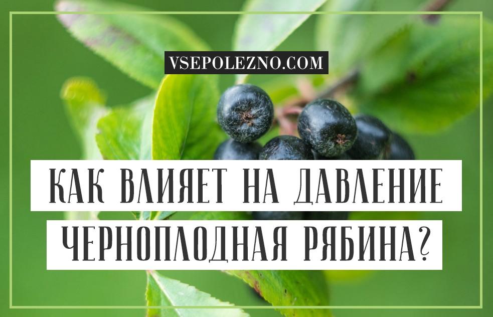 Черноплодная рябина - повышает или понижает давление