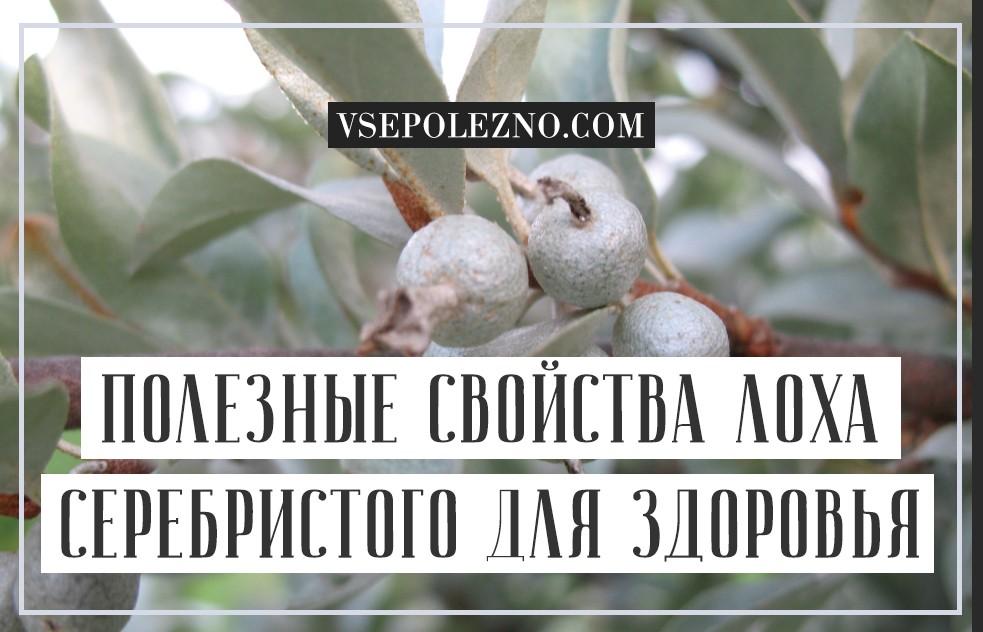 Дерево серебристый лох: выращивание и уход на приусадебном участке, описание и виды, правила ухода