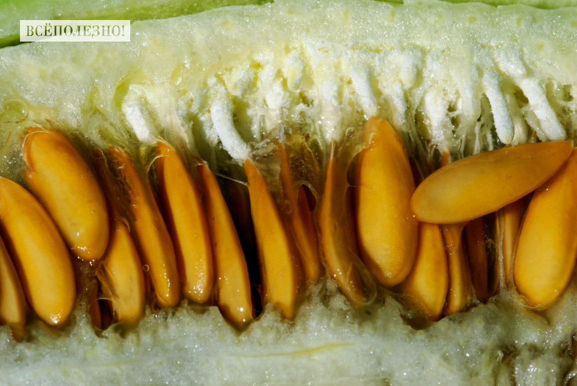 Особенности употребления семечек дыни, их польза и вред