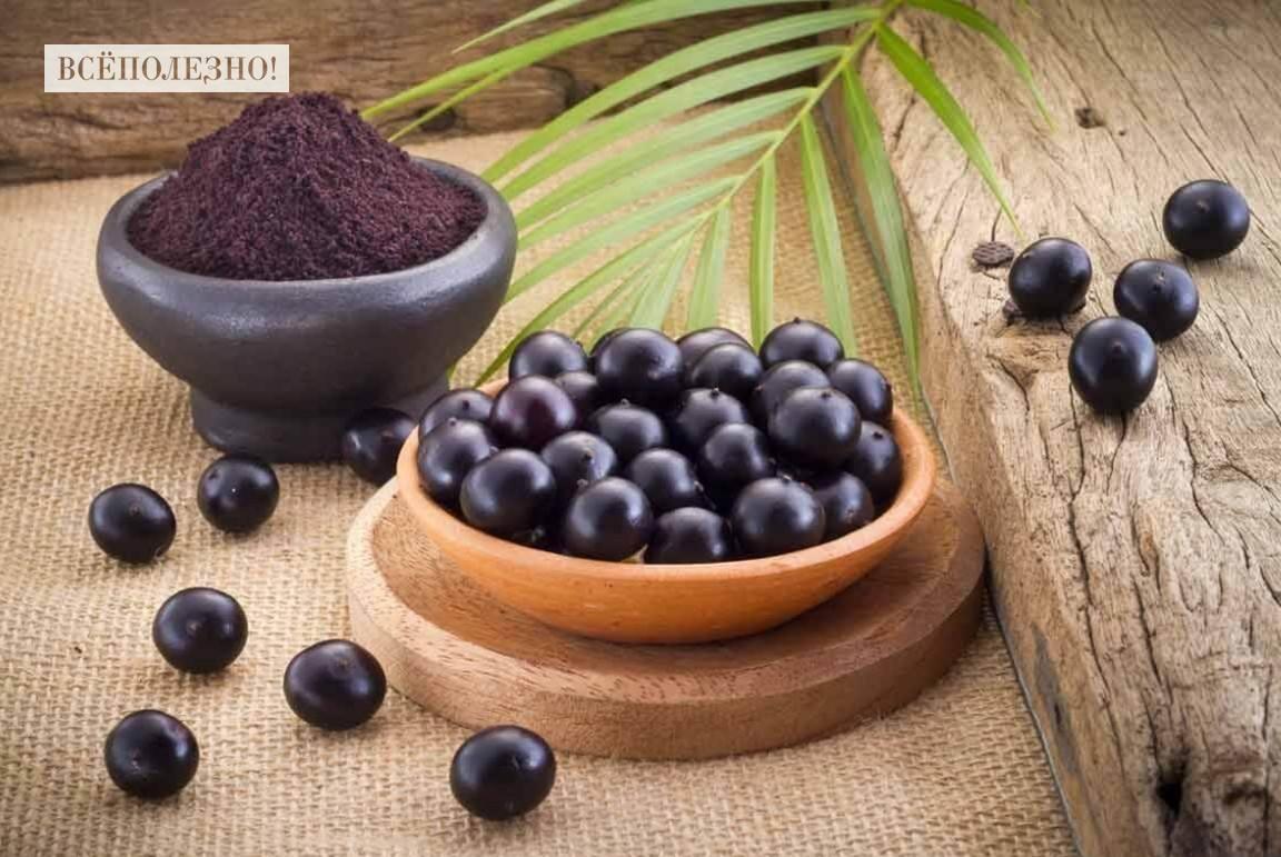 Полезные свойства ягод асаи для организма человека