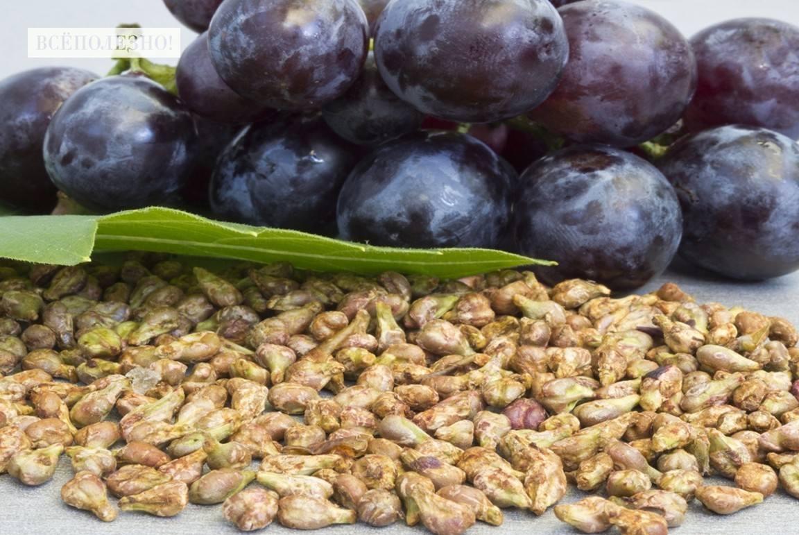 Чем полезен виноград Изабелла для здоровья?
