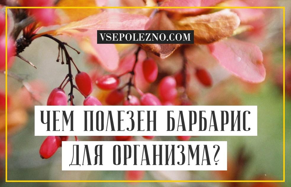 Барбарис ягода польза и вред как принимать