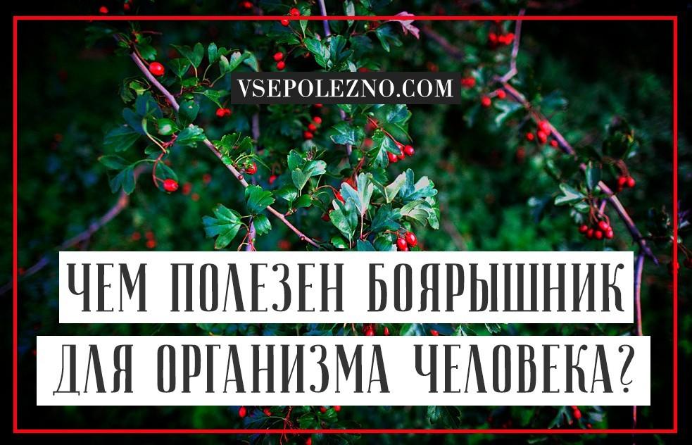 Боярышник польза и вред для здоровья организма женщины, мужчины