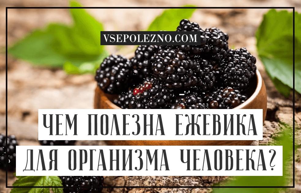 Ежевика и необыкновенная польза ягоды для здоровья