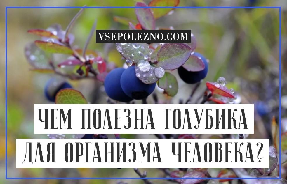 Голубика полезные свойства и противопоказания для мужчин