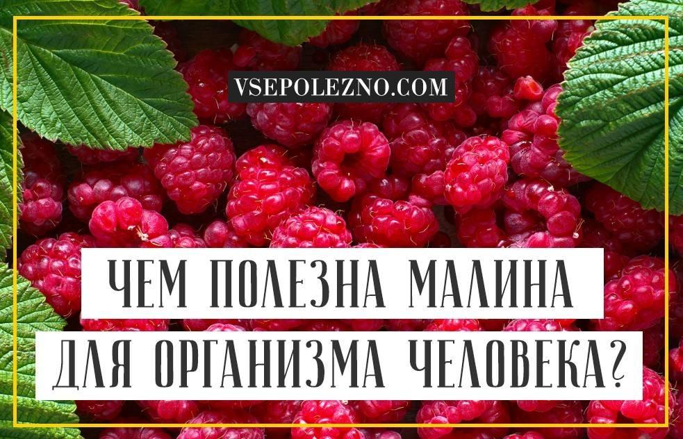 Польза малины для организма человека, особенности употребления, вред и возможные противопоказания