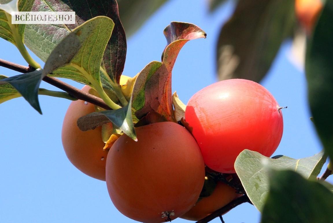 Калорийность фруктов на 100 грамм