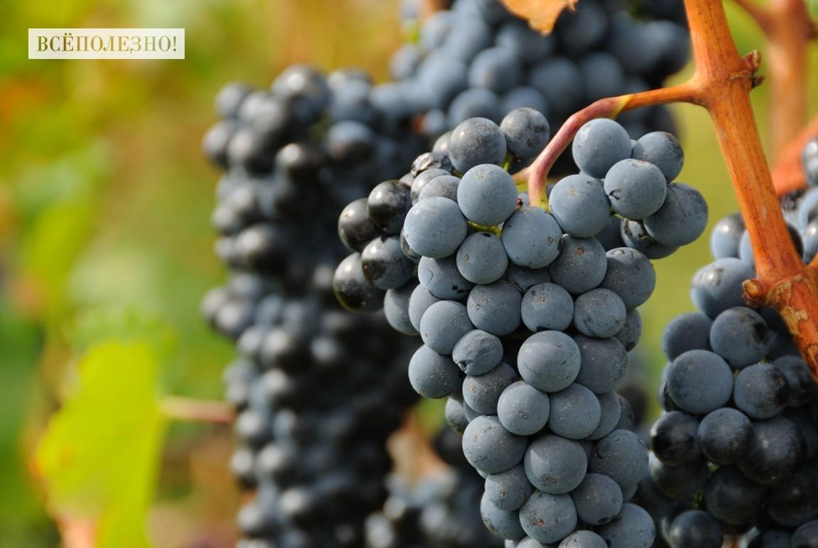 Состав витаминов и микроэлементов в винограде