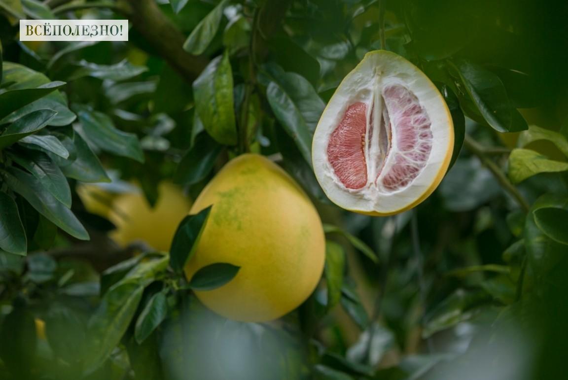 Какие витамины содержатся в помело?