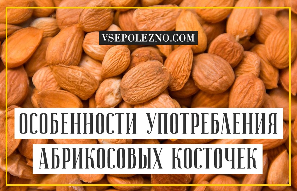 Чем полезна абрикосовая косточка для организма человека