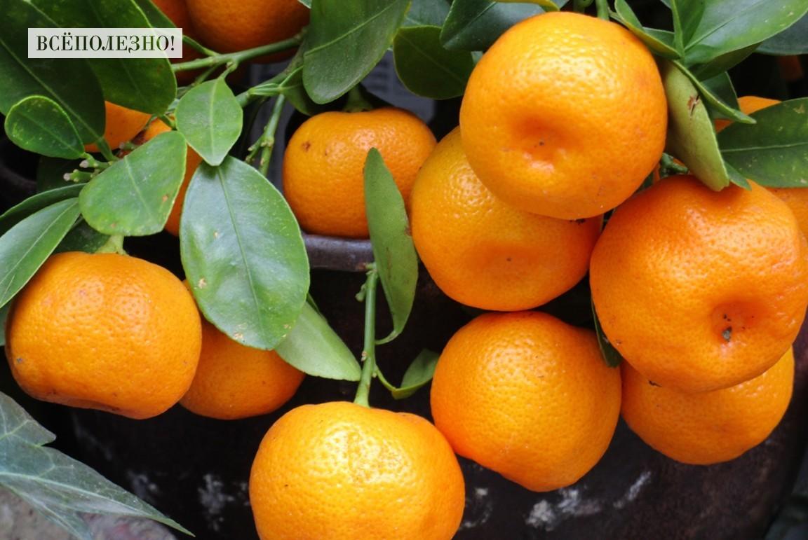 Польза мандаринов для организма женщины