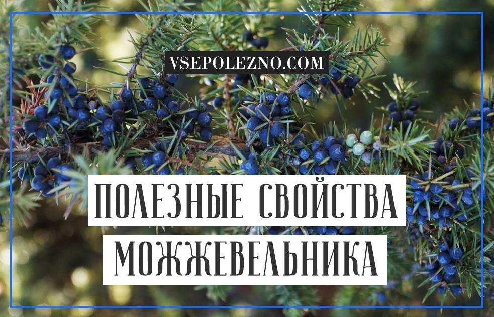 Ягоды можжевельника: лечебные свойства и противопоказания