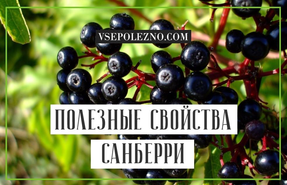 Санберри лечебные свойства и противопоказания