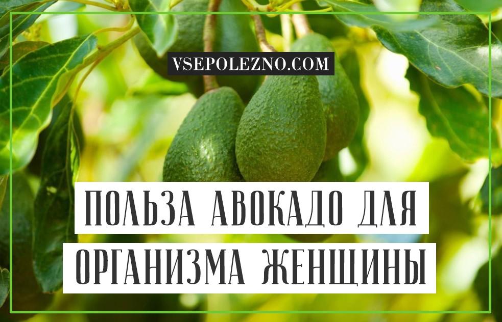 Авокадо — полезные свойства и противопоказания для женщин и мужчин