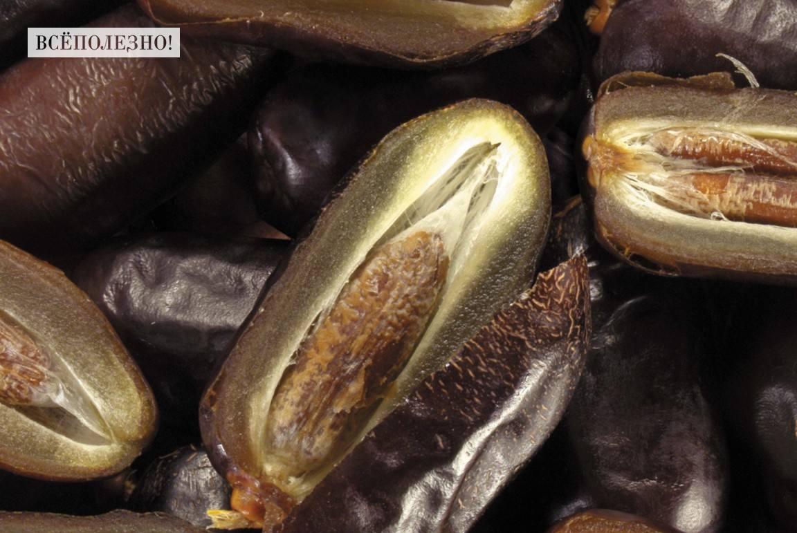 Химический состав фиников и его пищевая ценность