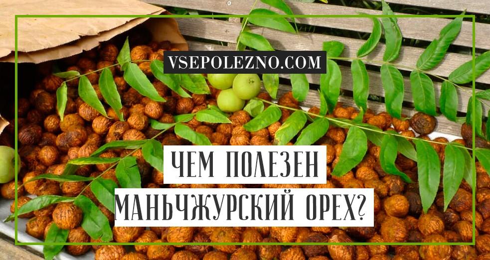 Настойка маньчжурского ореха на водке применение