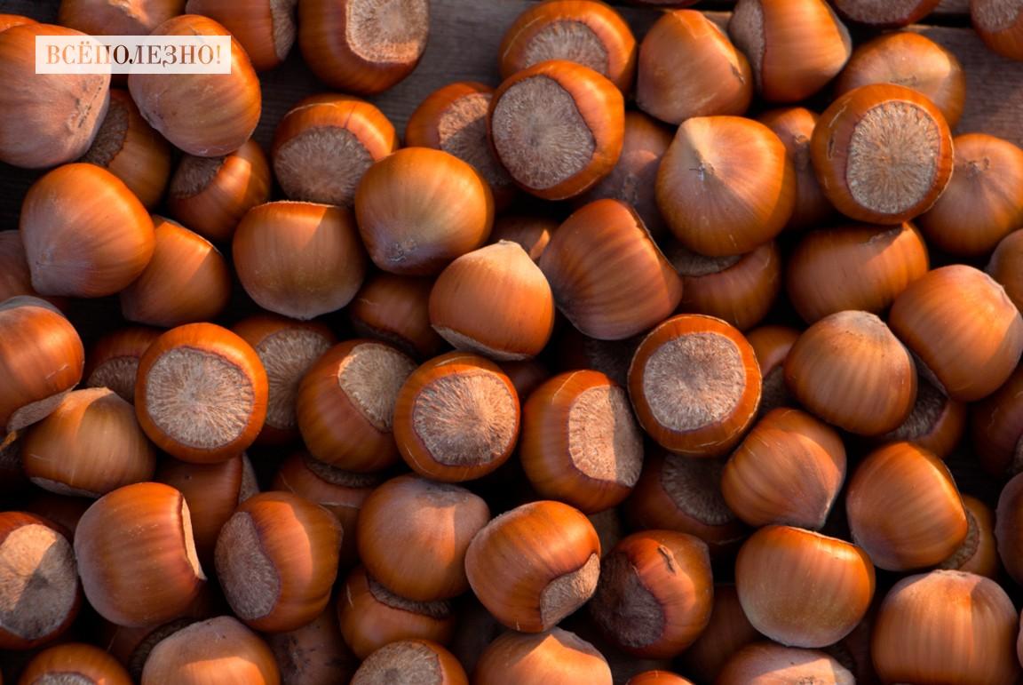 Полезные свойства ореха фундук для мужчин