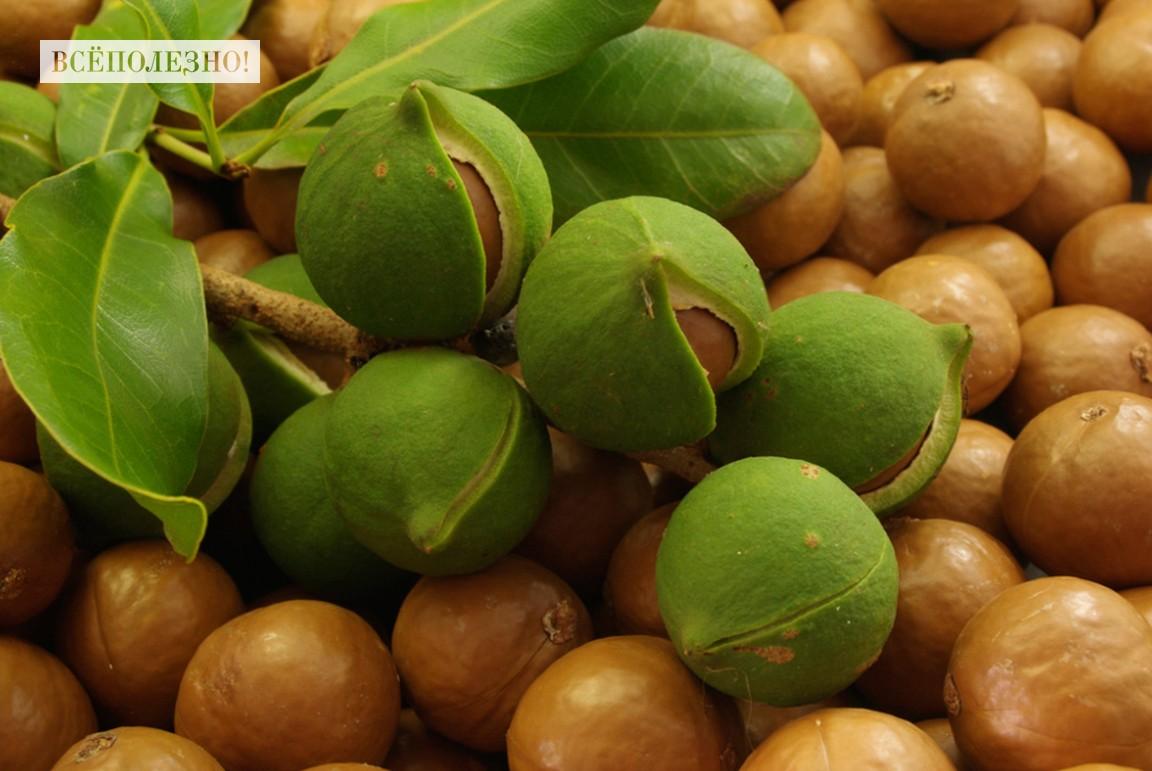 Можно ли употреблять орех макадамия при беременности?