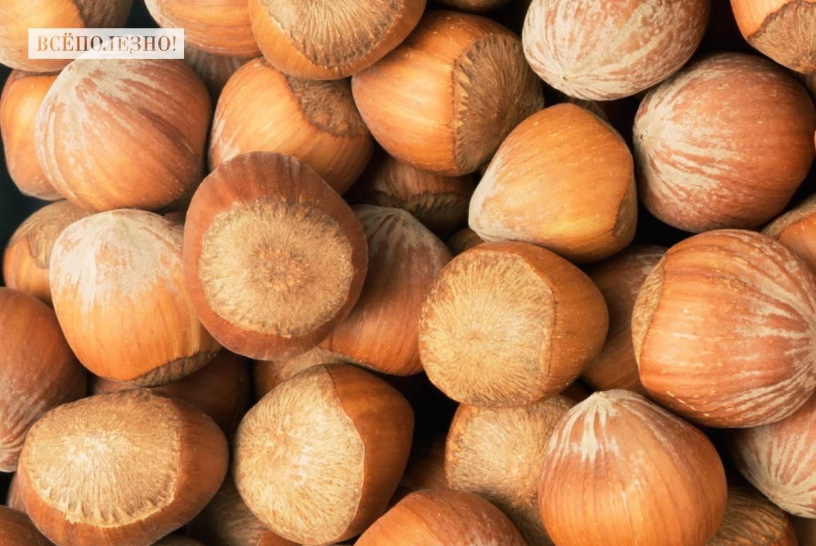 Чем полезен фундук орех для организма человека