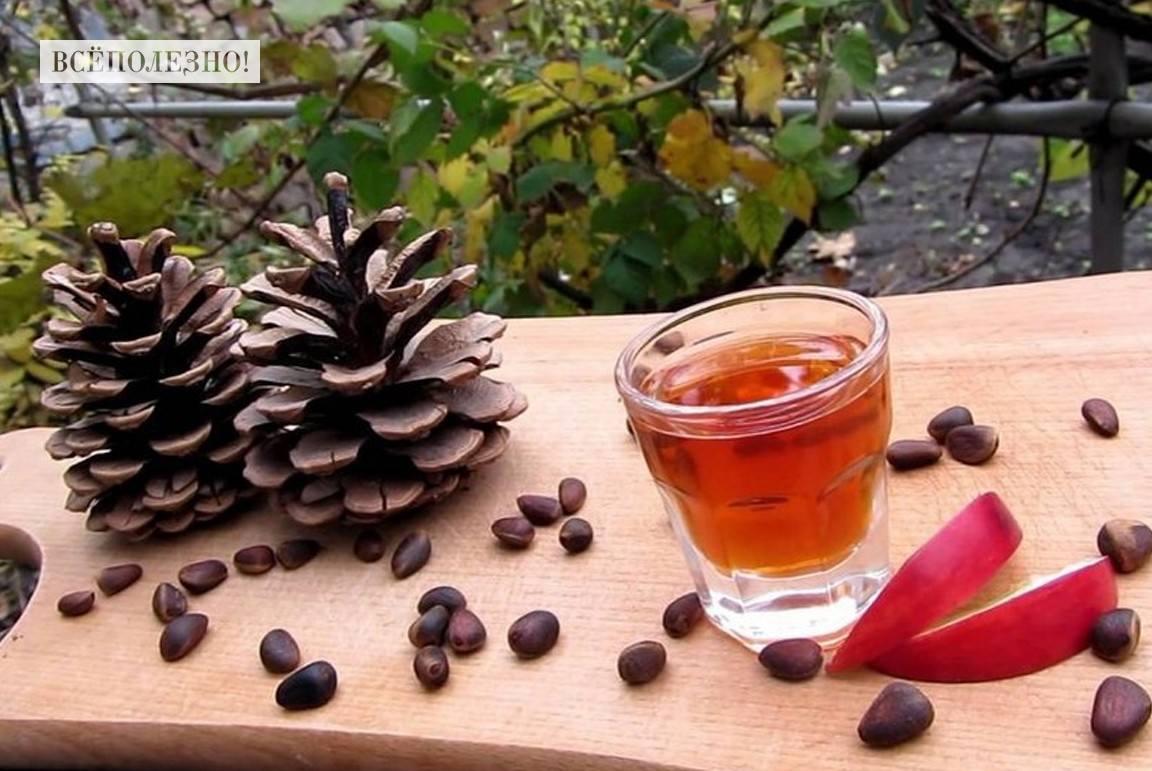 Польза настойки на кедровых орешках
