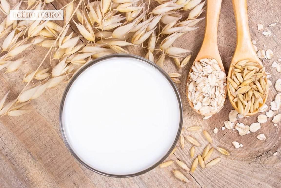 Чем полезно овсяное молочко для организма человека и как его пить